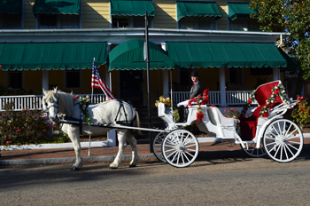 Horse Drawn Carriage Rides Hampton Roads Norfolk